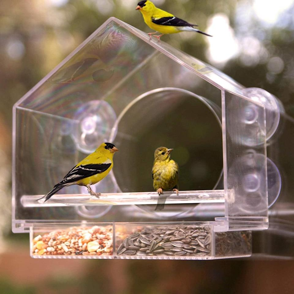 <p>The <span>Nature Anywhere Window Bird House Feeder</span> ($25, originally $40) comes with a sliding seed holder and four extra-strong suction cups so you can easily feed and watch over your friendly neighborhood birds. It's a great way for kids to get entertained and interested in the great outdoors. </p>