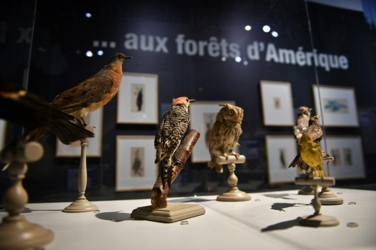 Researchers were surprised that there was no change in the ratios from collections dating back 130 years to more recent collections (AFP Photo/XAVIER LEOTY)