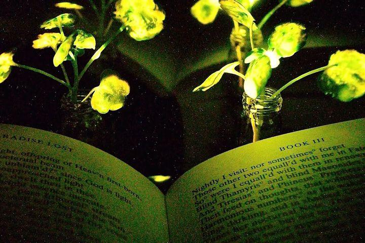 "<img alt=""""/><p>Engineers at MIT have created a <a rel=""nofollow"" href=""http://news.mit.edu/2017/engineers-create-nanobionic-plants-that-glow-1213"">technique</a> for embedding nanoparticles into plant leaves that make them emit a dim light. The nanoparticles contain chemicals known to make fireflies glow, known as luciferase and luciferin.</p>"