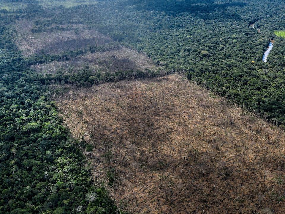 British supermarkets have threatened to boycott Brazilian products if the country passes a law which threatens the Amazon rainforest (Marizilda Cruppe/WWF/PA)