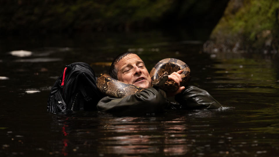 Bear Grylls got up close and personal with a boa constrictor while filming 'Animals on the Loose: A You vs. Wild Movie' in South Africa. (Credit: Duane Howard/Netflix)