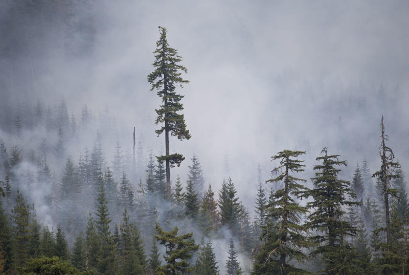 Smoke envelopes trees in an area where fire managers have started firing operations as part of the effort to fight the nearly 6,000 acre Whitewater Fire in the Willamette National Forest and Mt. Jefferson Wilderness near Marion Lakes, Ore. (Andy Nelson/The Register-Guard via AP)