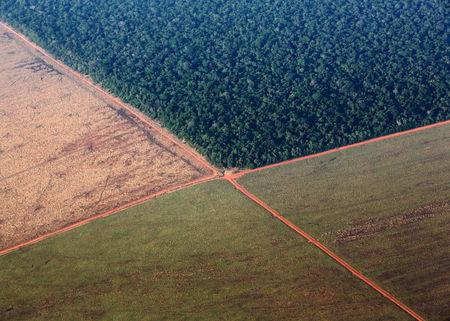 FILE PHOTO: The Amazon rain forest, bordered by deforested land prepared for the planting of soybeans, in pictured in this aerial photo taken over Mato Grosso state in western Brazil