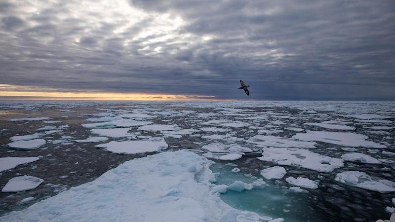 Arctic sea ice falls to second lowest level in 'crazy' year