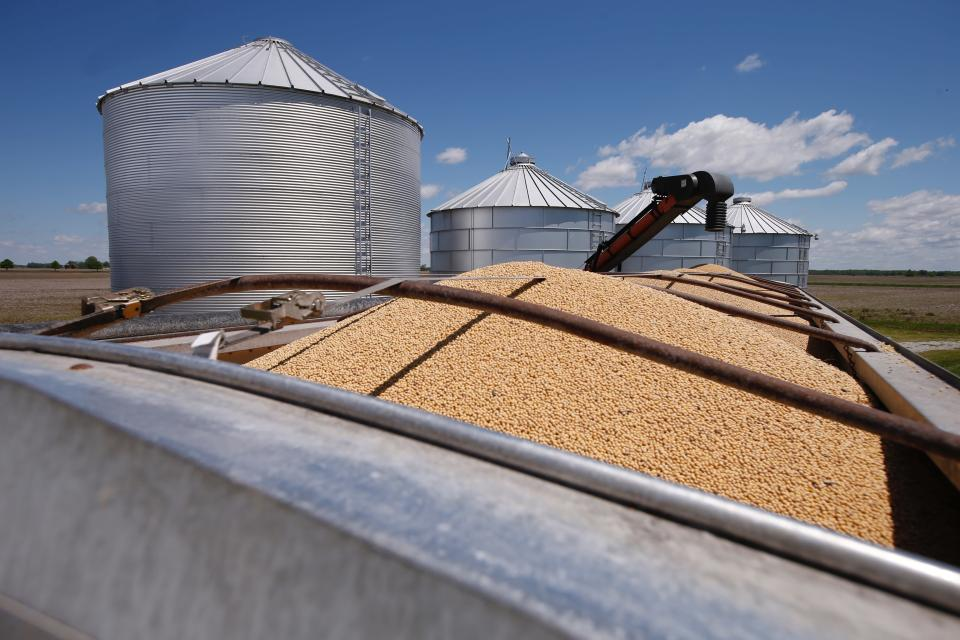 FILE - In this May 14, 2019, file photo soybeans awaiting transport sit in a truck-bed in Delaware, Ohio. The Biden administration said Wednesday, Aug. 18, 2021, that it was banning use of chlorpyrifos, a widely used pesticide long targeted by environmentalists because it poses risks to children and farm workers. Chlorpyrifos is applied on numerous crops, including soybeans, fruit and nut trees, broccoli and cauliflower. It has been linked to potential brain damage in children. (AP Photo/Angie Wang, File)