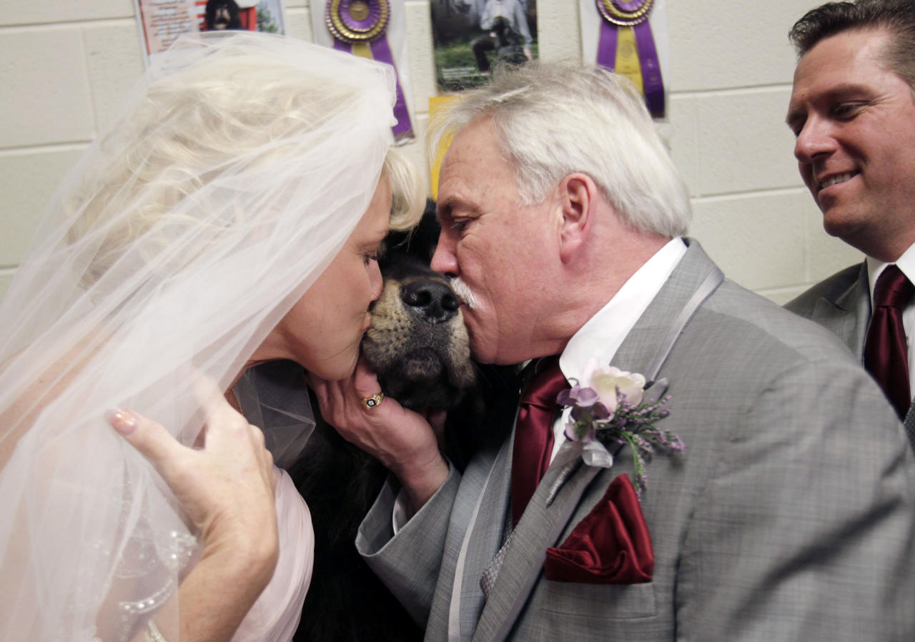 Debbie Parsons, left, and Brad Slayton kiss their dog, a Tibetan mastiff named Major, after they were married at the 136th annual Westminster Kennel Club dog show in New York, Tuesday, Feb. 14, 2012. Best man Tony Carter looks on at right. Carter is the Major's handler and Major won Best in Breed this year at the dog show. (AP Photo/Seth Wenig)