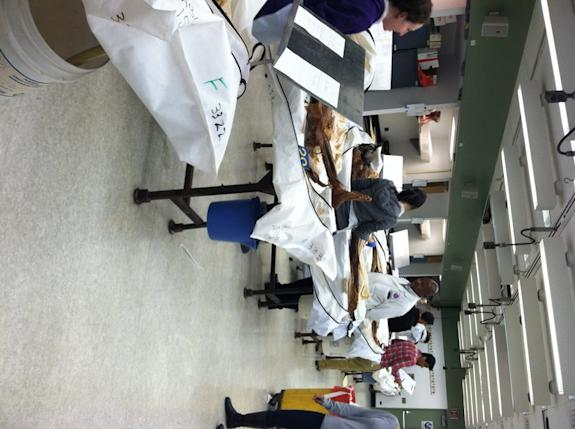 Inside a Gross Anatomy Lab: The Human Body as Textbook