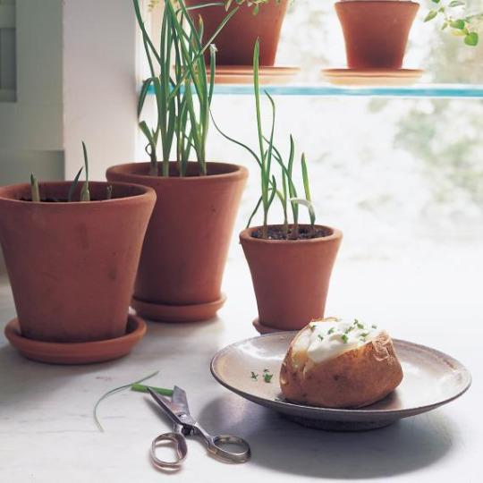 10 Vegetables You Can Regrow Yourself From Kitchen Scraps: Everything's Better With Garlic! Learn How To Grow It Inside