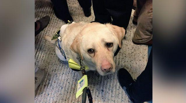 Amit Patel and his guide dog Kika boarded the Waterloo East train in London on Tuesday. Photo: Twitter/ Amit Patel