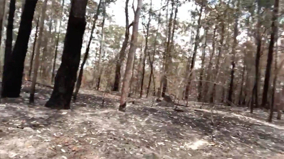 Footage of bushfire damage near Russell Crowe's NSW property shared to Twitter