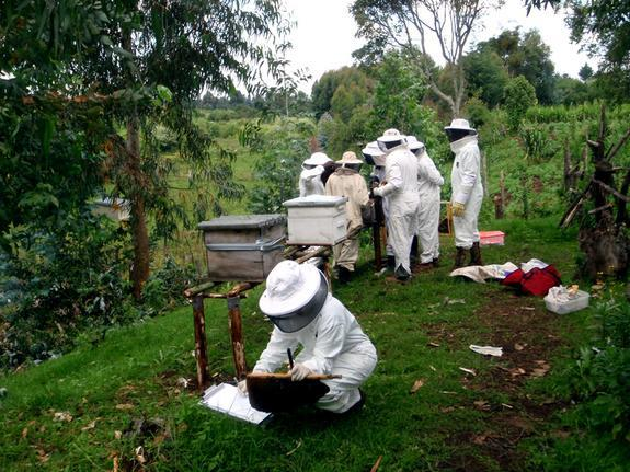 An NSF-supported research team collects hive samples and data on honey bee colonies in Kenya's Aberdare Mountains. The scientists analyzed bee populations at 24 sites across Kenya, looking for bees affected by parasites, viruses and pathogens.