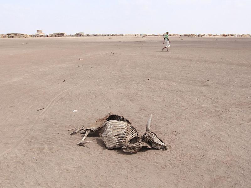 A man walks near the carcass of a dead cow in Farado Kebele in Ethiopia's Somali region: Reuters