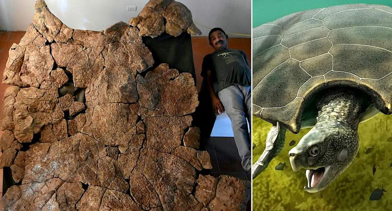 The giant turtle is named Stupendemys geographicus (Picture: SWNS)