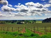 """<p><a href=""""https://foursquare.com/v/sokol-blosser-winery/4a8da2bef964a520571020e3"""" rel=""""nofollow noopener"""" target=""""_blank"""" data-ylk=""""slk:Sokol Blosser Winery"""" class=""""link rapid-noclick-resp"""">Sokol Blosser Winery</a> in Dayton</p><p>""""<span class=""""entity tip_taste_match"""">Beautiful view</span> of Mt. Hood outside the tasting room. Ask for the late harvest Sauvignon Blanc.<span class=""""redactor-invisible-space"""">"""" - Foursquare user <a href=""""https://foursquare.com/user/1663350"""" rel=""""nofollow noopener"""" target=""""_blank"""" data-ylk=""""slk:Daniel Pollack-Pelzner"""" class=""""link rapid-noclick-resp"""">Daniel Pollack-Pelzner</a></span></p>"""