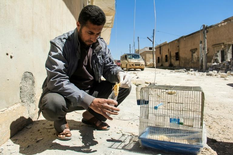 A Syrian collects the body of a dead bird, reportedly killed by a suspected toxic gas attack in Khan Sheikhun, on April 5, 2017