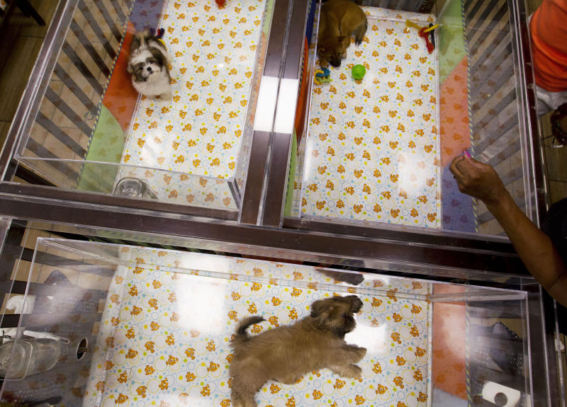 "People watch puppies in a cage at a pet store in Columbia, Md., Monday, Aug. 26, 2019. Pet stores are suing to block a Maryland law that will bar them from selling commercially bred dogs and cats, a measure billed as a check against unlicensed and substandard ""puppy mills."" (AP Photo/Jose Luis Magana)"