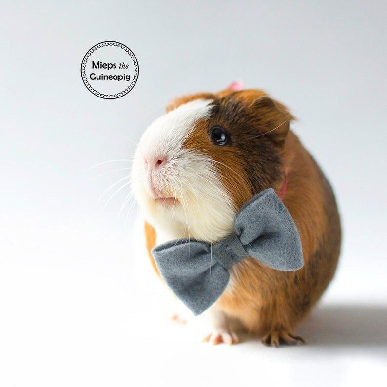 """<p><strong>MiepsTheGuineapig</strong></p><p>etsy.com</p><p><strong>$11.16</strong></p><p><a href=""""https://go.redirectingat.com?id=74968X1596630&url=https%3A%2F%2Fwww.etsy.com%2Flisting%2F487052236%2Fbow-tie-for-guinea-pig&sref=https%3A%2F%2Fwww.countryliving.com%2Flife%2Fkids-pets%2Fg36718902%2Fcostumes-for-guinea-pigs%2F"""" rel=""""nofollow noopener"""" target=""""_blank"""" data-ylk=""""slk:Shop Now"""" class=""""link rapid-noclick-resp"""">Shop Now</a></p><p>Some guinea pigs don't really care what they are dressed as, as long as they feel spiffy. This felt bowtie is the perfect garment to keep your fluffy friend looking fancy. </p>"""
