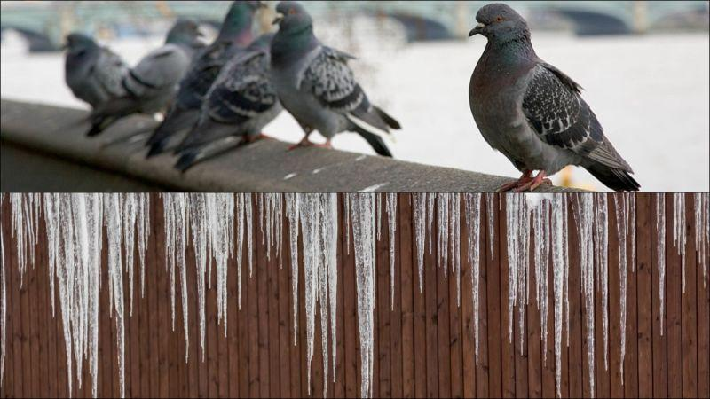 A row of pigeons sitting above a line of icicles hanging from a building