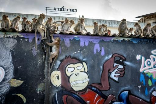Footage of hundreds of monkeys brawling over food in the Thai city of Lopburi went viral on social media in March