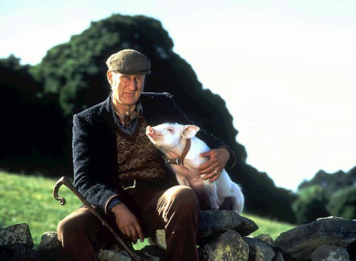 """A farmer (James Cromwell) forms a special relationship with a pig in """"Babe."""""""