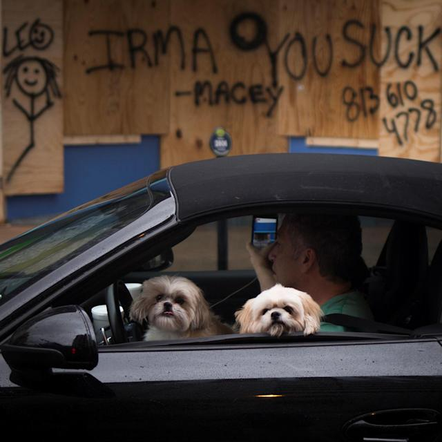 <p><strong>Tampa</strong><br>Dogs look out of a vehicle as residents survey damage from Hurricane Irma in Downtown Tampa, Fla., Sept. 11, 2017. (Photo: Adrees Latif/Reuters) </p>