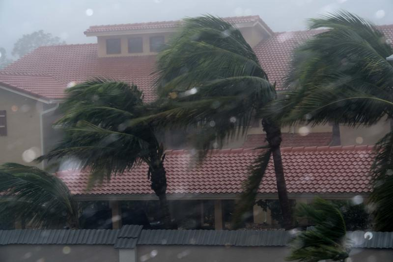 Palm trees blow in the winds in Bonita Springs.