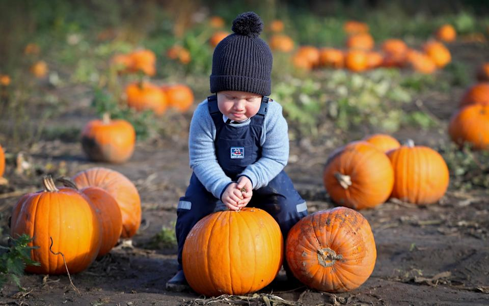 Theo Jackson picks pumpkins for Halloween at Garson Farm in London - Chris Jackson/Getty Images