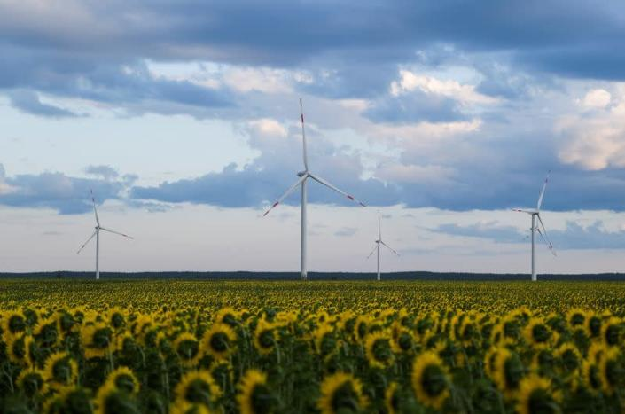 FILE PHOTO: Wind turbines are seen in sunflower field during sunset outside Ulyanovsk
