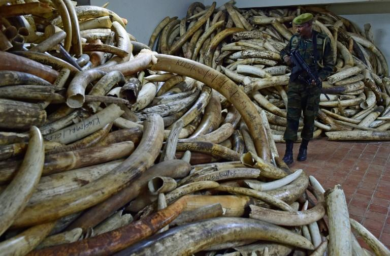 China announces ban on ivory trade, new hope for Africa