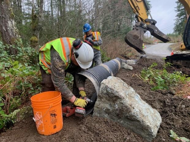 Crews are installing 400 metres of directive fencing intended to funnel the toads into the culverts.