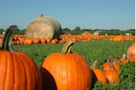 """<p><strong>Bastrop, Texas (Oct 3–Nov 15)</strong></p><p>Make your fall even bigger in Texas with the scenic <a href=""""https://www.bartonhillfarms.com/"""" rel=""""nofollow noopener"""" target=""""_blank"""" data-ylk=""""slk:Barton Hill Farms"""" class=""""link rapid-noclick-resp""""><strong>Barton Hill Farms</strong></a>. After getting lost in the maze and bouncing on the jumping pillow, you can refresh yourself with lemonade or a glass of frozen sangria (if you're 21 or older, of course). Play backyard games, listen to live music, and pick that pumpkin. Stay tuned for 2021 ticket prices.</p>"""