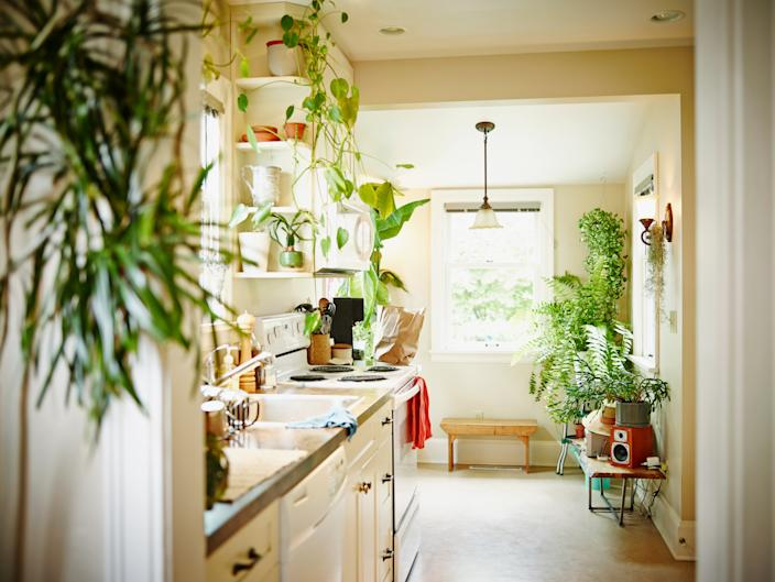 Kitchen in home