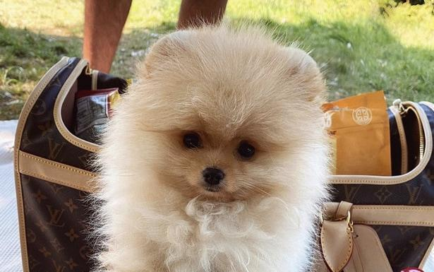 A Love Island couple bought a puppy online from Russia, which died within six days of arriving after health problems