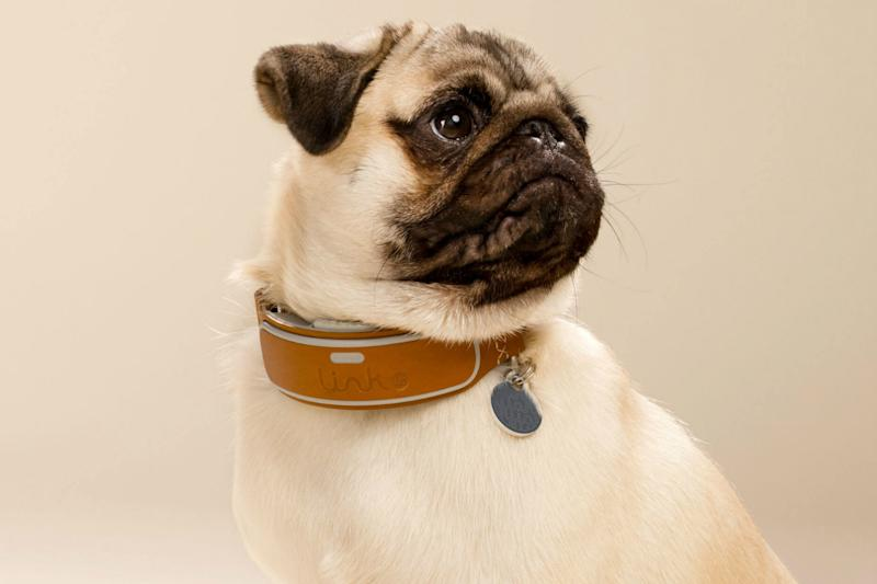Dog whisperer alert: this AKC affiliated smart collar helps you stay in touch