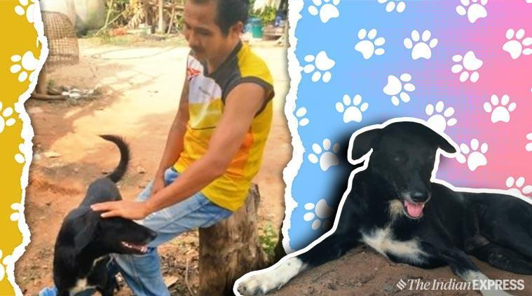 dog digs out buried baby, dog, dog story, Thailand, Thailand dog saves baby, Thailand stray dog viral story, trending, viral story, indian express, indian express news
