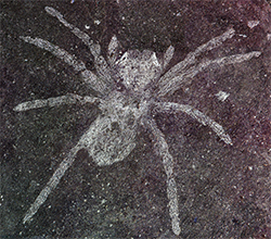 """<img alt=""""""""/> <p>Fossil hunters in Korea discovered long-dead spiders preserved in rock. And to the delight of scientists, the arachnids' eyes are still reflective — some 110 million years after the creatures died.</p>  <p>It's rare for insects and arachnids — which are far more brittle than shelled sea creatures — to become fossilized in rocks. But for reasons still unknown, a couple of these spiders did fossilize, and the unique shape of their eye structures continue to reflect light — even in their petrified form.</p>  <p>The reflective eye structure is called a tapetum, and it's often used by creatures who hunt in the dark.</p>  <p>""""So, night-hunting predators tend to use this different kind of eye,"""" Paul Selden, director of the Paleontological Institute at Kansas University's Biodiversity Institute and Natural History Museum, said in a <a rel=""""nofollow"""" href=""""http://news.ku.edu/2019/02/06/ancient-spider-fossils-surprisingly-preserved-rock-reveal-reflective-eyes"""">statement</a>. """"This was thefirst time a tapetum had been in found a fossil. This tapetum was canoe-shaped — it looks a bit like a Canadian canoe.""""</p>     <p><img title=""""A 100-year-old spider with reflective eyes."""" alt=""""A 100-year-old spider with reflective eyes.""""/></p>      <p>A 100-year-old spider with reflective eyes.</p>    <div>   <p>Image: PAUL A. SELLEN/The University of Kansas</p>  </div>   <p>Today's wolf spiders employ the same eye structures to hunt, Selden added.</p>  <p>A mystery still remains, however: How did the spiders become fossilized? Their petrified bodies were found in a layer of rock filled with fish and other sea critters — but spiders don't dwell in water.</p>  <div>  <p>SEE ALSO: <a rel=""""nofollow"""" href=""""http://mashable.com/article/opportunity-rover-mars-last-picture?utm_campaign&utm_cid=a-seealso&utm_context=textlink&utm_medium=rss&utm_source"""">Opportunity rover's last picture is as grim as it is dark</a></p> </div>  <p>""""It has to be a very special situation where they were was"""