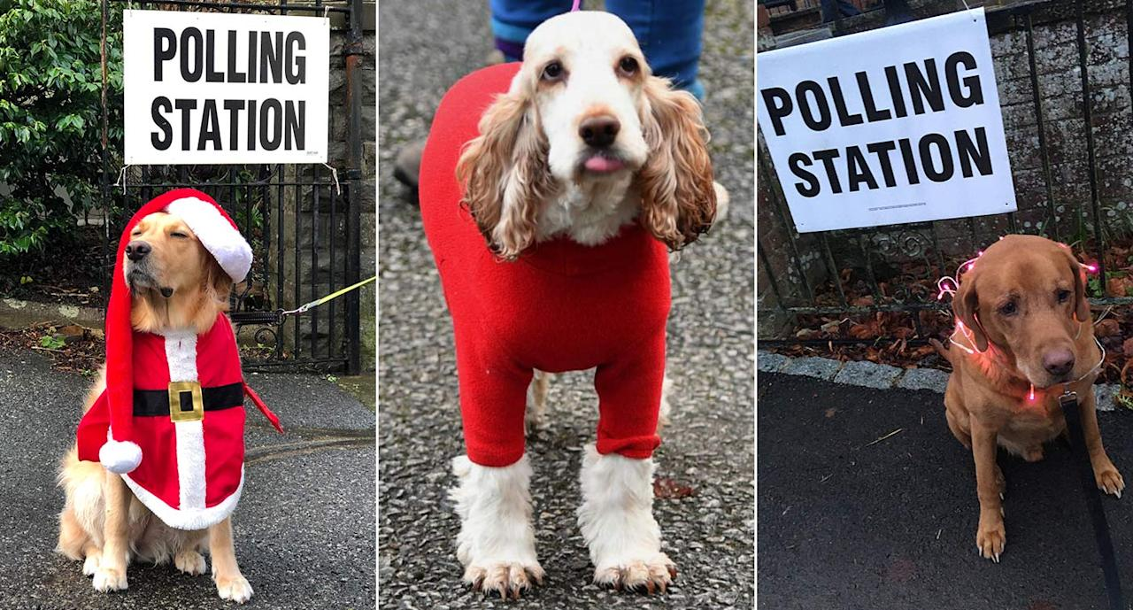 Dogs at polling stations returns for 2019