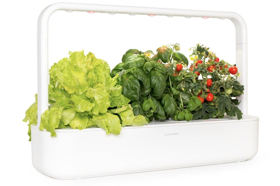 <p>The <span>Click and Grow Smart Garden 9</span> ($200) is an automatic self-watering garden that would be a great addition to any desk or kitchen table. It comes with tomato, basil, and lettuce seed pods, but you can also sub in your own seeds.</p>