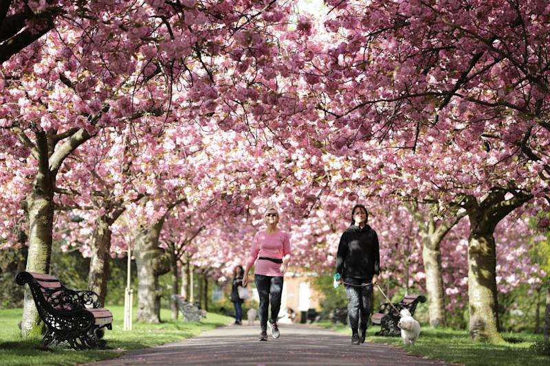 Greenwich Park (Getty Images)