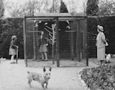 <p>Accompanied by their mother and numerous pet dogs, Princess Margaret and Princess Elizabeth are seen visiting the royal family's aviary, which is kept on the grounds of the Royal Lodge at Windsor. </p>