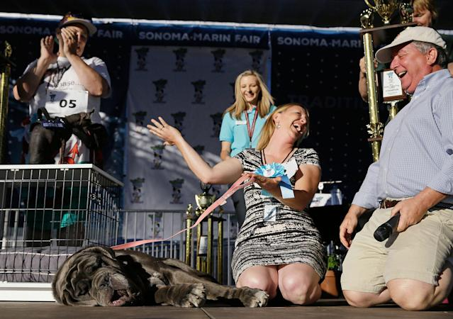 <p>Shirley Zindler, of Sebastopol, Calif., reacts after her dog Martha, a Neapolitan mastiff, won the World's Ugliest Dog Contest at the Sonoma-Marin Fair on Friday, June 23, 2017, in Petaluma, Calif. At right is judge Kerry Sanders. (Photo: Eric Risberg/AP) </p>