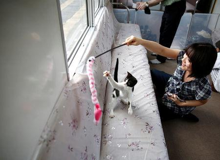 A passenger plays with a cat, in a train cat cafe, held on a local train to bring awareness to the culling of stray cats, in Ogaki, Gifu Prefecture, Japan September 10, 2017. REUTERS/Kim Kyung-Hoon
