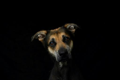 France's animal shelters fear overcrowding, so the government has agreed to a confinement exemption to allow adoptions