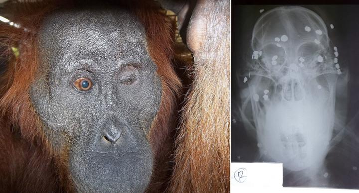 Aan was shot on a palm oil plantation in 2012 (PA)