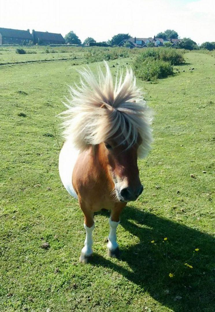 Rescue pony Bobby, 12, was found with slashed and mutilated in his field