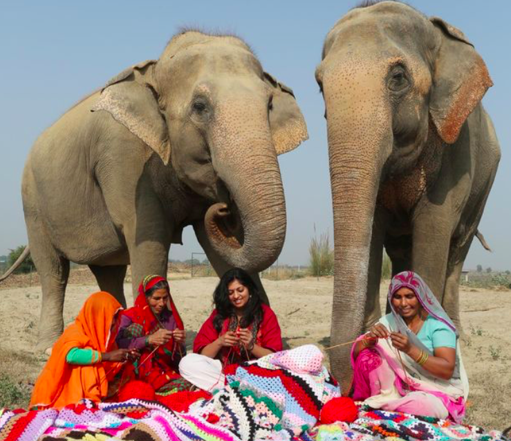 Keeping warm: Kind-hearted locals have been knitting jumbo jumpers for the elephants (North Downs PIcture Agency)