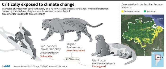 Examples of thermally-sensitive mammals in the Amazon whose ability to adapt to climate change by moving to cooler areas is undermined by the fragmentation of their rainforest habitat (AFP Photo/Gillian HANDYSIDE)