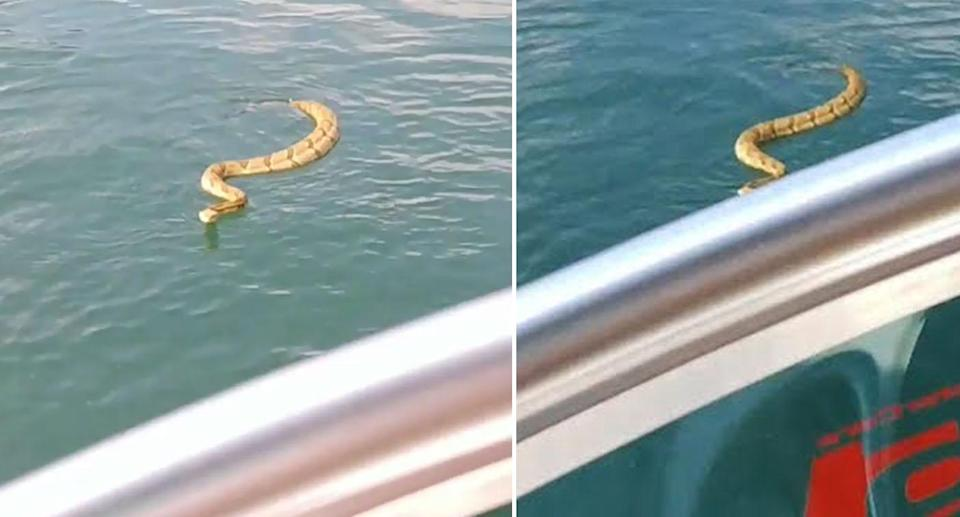 The curious snake came in for a closer look, much to the displeasure of the children onboard the boat. Source: Instagram/Wayne Robbins
