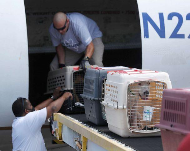 PHOTO: Pilot Derek Harbaugh places a dog in a carrier onto the ramp, as he unloaded animals from a plane, which had one hundred cats and dogs from Hammond, Louisiana, through the effort of Wings of Rescue ahead of Hurricane Sally. (Karen Warren/AP)