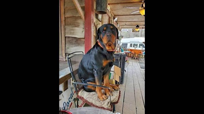 Rocky was fatally shot while snoozing on the porch of Betsey's ​Ole Country Store & Cabin Rental on N.C. 90 in the Caldwell County community of Collettsville on Sunday, the sheriff's office posted on Facebook..
